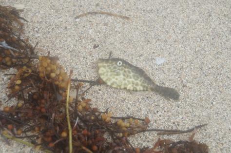 Liten fisk som spolats upp på stranden