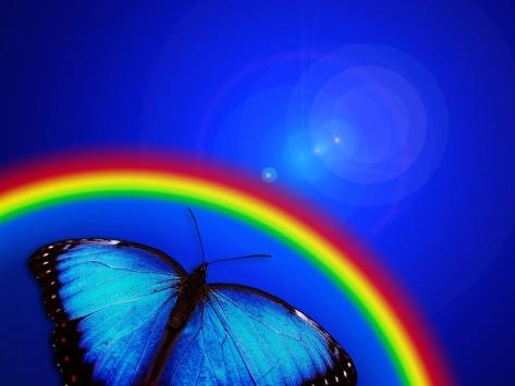 Regnbåde och fjäril