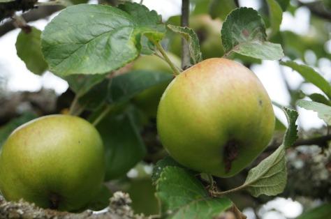 Äppelkart