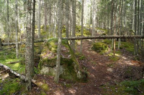 Stigen i urskogen