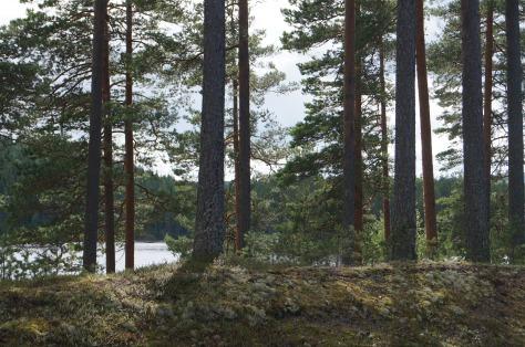 tallskog_3