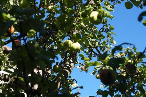 #Äppelträd, #asaole