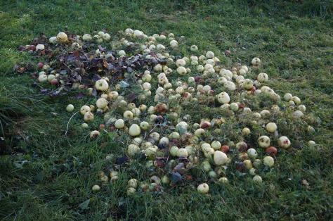 #Sammankrattade äpplen, #asaole