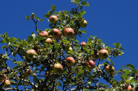 #Äpplen mot blå himmel, #asaole