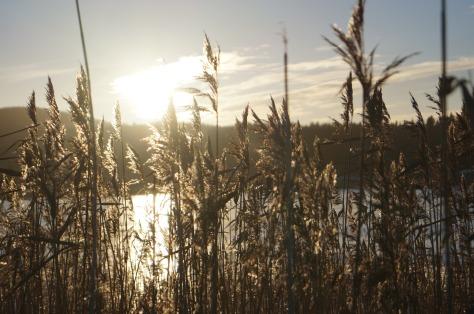 Vintervass i motljus 2_#asaole